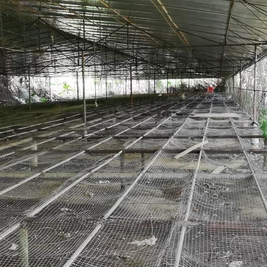 坑塘  合作养殖鱼塘120亩/1500元/年