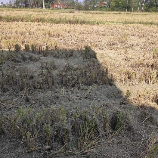 水田 1000亩以上水稻田流转,找有实力的老板!嘴炮勿扰