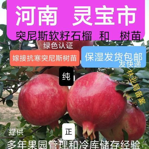 突尼斯软籽石榴树苗  可以视频起苗发货  河南 灵宝市