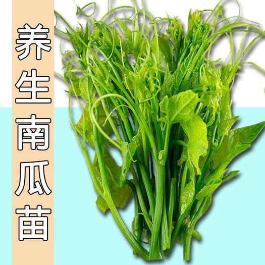 养生南瓜苗种子专吃茎叶南瓜种子特色蔬菜籽春季夏秋四季阳台盆栽