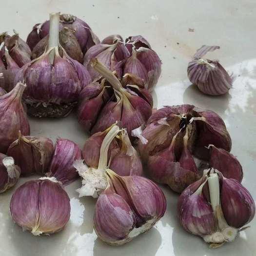 红皮蒜  紫皮大蒜红皮大蒜2021年大理鲜干蒜瓣蒜批发量
