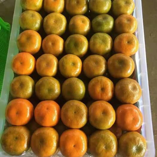 特早无核蜜桔 精品柑橘  高山叶桔 产地直销批发质优价廉