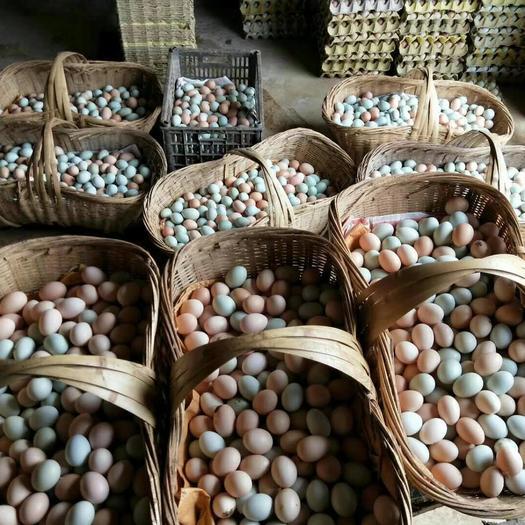林下散养土鸡蛋,粉绿,干净新鲜,生态无抗