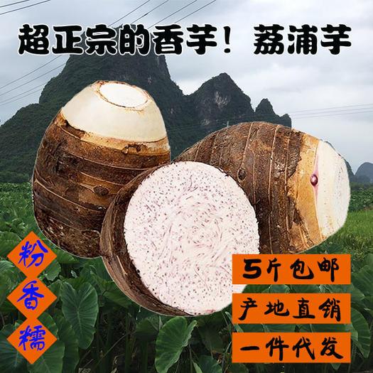 香芋  广西荔浦芋头正宗新鲜现挖糯香专业一件代发