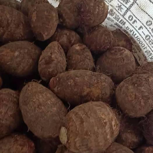 毛芋头  新鲜芋头全国发货!大球中球小球,通货价格行情。山东芋头基地