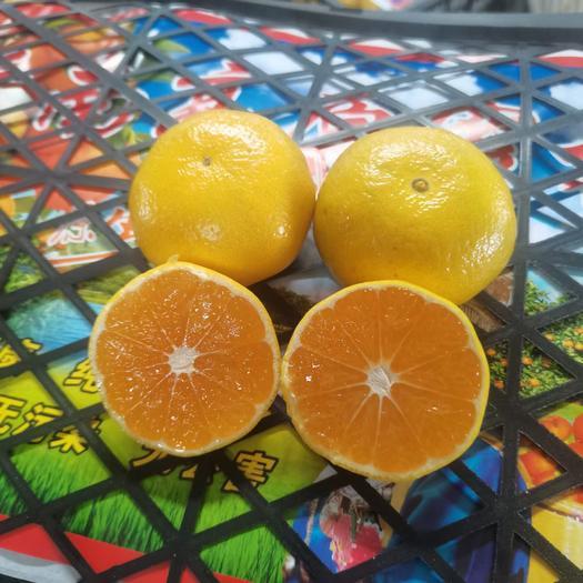 蜜桔柑桔云南蜜橘大量上市产地直销保质保量欢迎来电联系