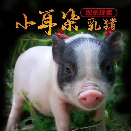 乳猪花猪广式烤乳猪