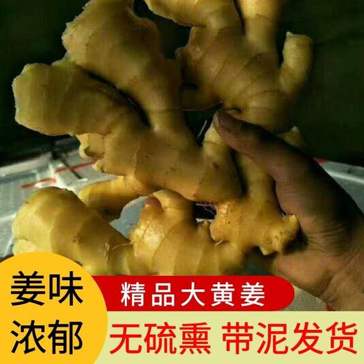 大黄姜  生姜批发鲜姜,老姜基地直销保质保量全国发物流