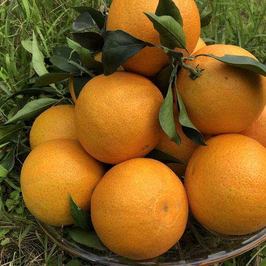 爱媛橙  爱媛果冻橙子5斤8斤6个规格特大新鲜水果泡沫托装产地直供