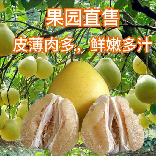 蜜桔  白心蜜柚,皮薄,果靓,口味甜 ,原产地直销,可看货后确认。