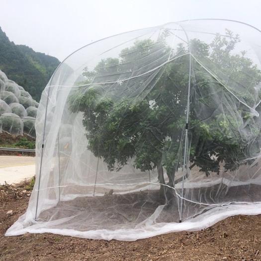 杨梅网罩 加厚农用防虫网 果树防虫网 脐橙防虫网罩 猪厂防蚊