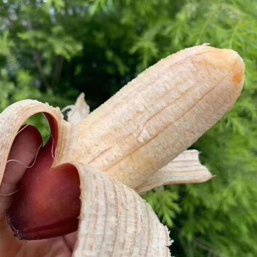 福建红美人香蕉苹果蕉应季水果软糯香甜基地新鲜直发包邮一件代发