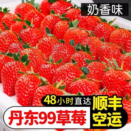 红颜草莓  丹东99牛奶草莓新鲜3斤奶油红颜大草莓顺丰包邮当季水果