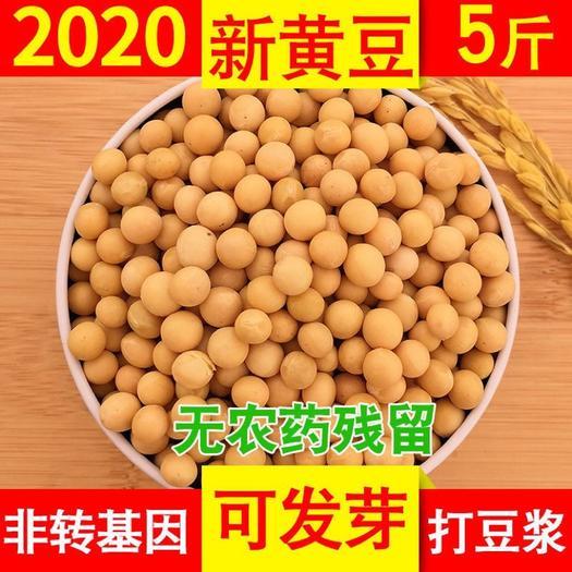 小粒黄豆 新鲜东北笨土黄豆2斤散装农家非转基因大豆子豆浆生豆芽小粒5斤