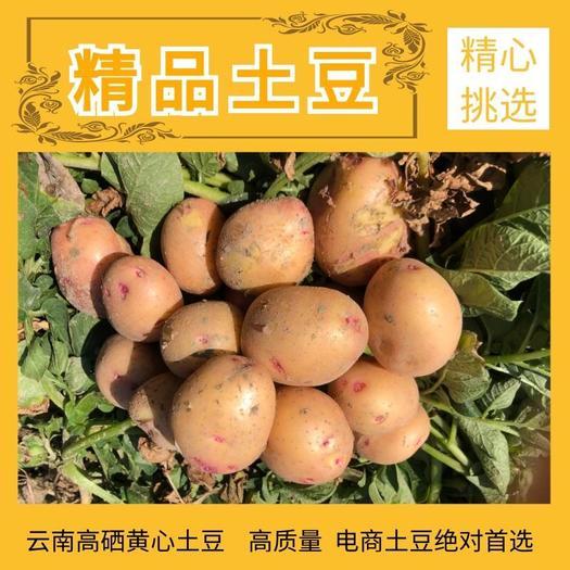 云南高原精品电商土豆供应商绝对是您首选,确认过眼神了就它了!