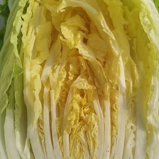 黄心大白菜平度大白菜山东大白菜