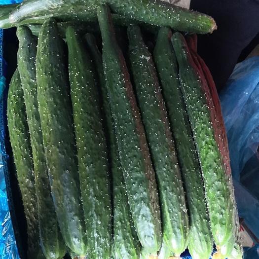 刺黄瓜  河南万亩大棚黄瓜基地 干花密刺 黑条 25-30 大量上市