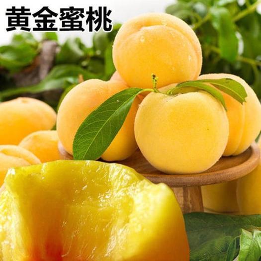 锦绣黄桃苗 黄蜜 优质嫁接桃树苗 个大味甜 基地直销
