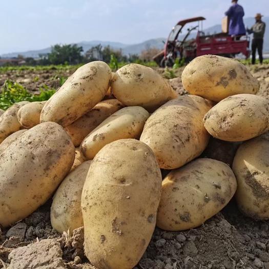 云薯  黄皮黄心新鲜现挖精品土豆