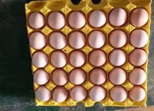 粉壳蛋  420枚/箱精品农五,农二,毛重45斤-52斤,粉色口感清香