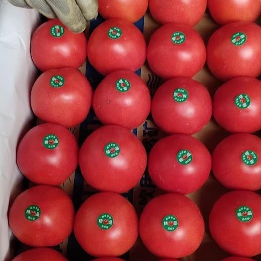 硬粉西红柿  西红柿大量上市 果性饱满 颜色鲜艳 货源充足