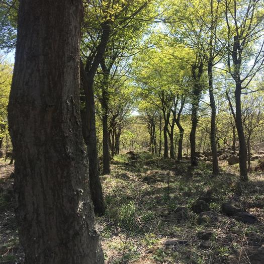 灌木林地  大约200亩山林,自家种植各种树种2万棵(直径8-40)