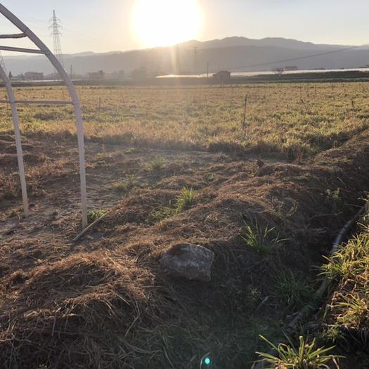 水田 供应优质大棚地新建大棚种植基地
