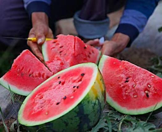 甜王西瓜 1茬西瓜 原棚西瓜 京欣西瓜 山东西瓜基地大量现货