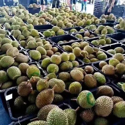 猫山王榴莲,马来西亚液氮整果,顺丰冷运,锁鲜配送