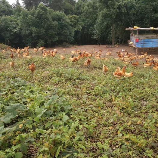 農場 養殖基地招租,距離高速路口幾公里,水泥路直達基地水源充足
