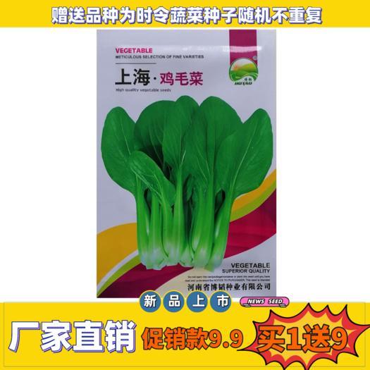 上海青種子  上海雞毛菜種子四季播早熟有機小白菜種籽春季夏秋冬季青蔬菜種孑