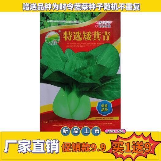 上海青種子  雞毛菜種子種籽四季小白菜青菜菜種上海青蔬菜種子正宗菜籽孑冬季