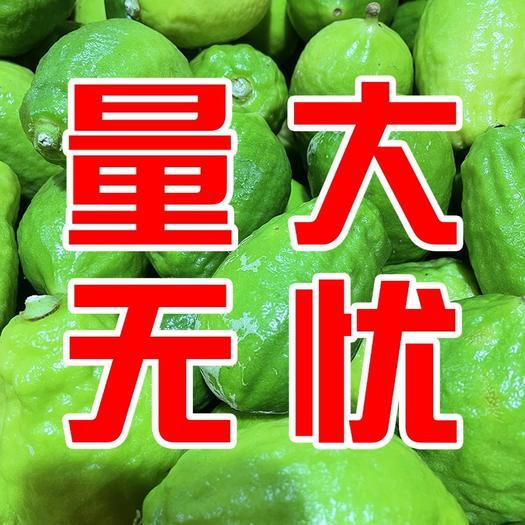 喜茶自用皮厚香气足广东香水柠檬产地直发