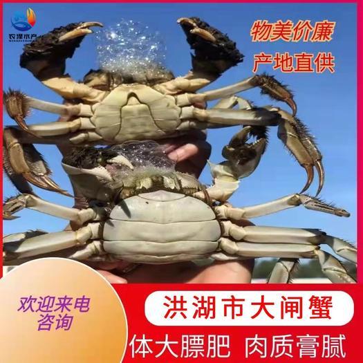 大闸蟹  洪湖市清水 一手货源 全国发货 支持混批 死蟹包赔