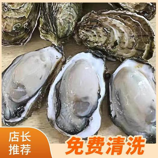 生蚝鲜活 全壳烧烤新鲜半壳牡蛎 广东生蚝 汫洲生蚝