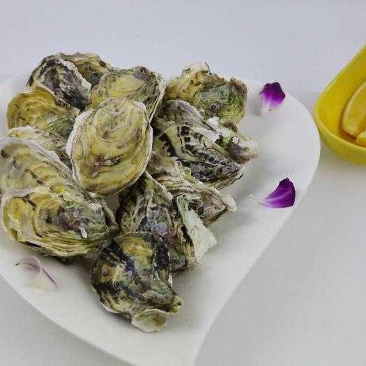 牡蛎  网红高压锅蚝深海珍珠蚝台湾蚝 联系我们加入团批价更便宜