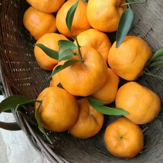椪柑  湖北碰柑 碰柑鲜果 储存果 芦柑 产地一手货源 保质保量
